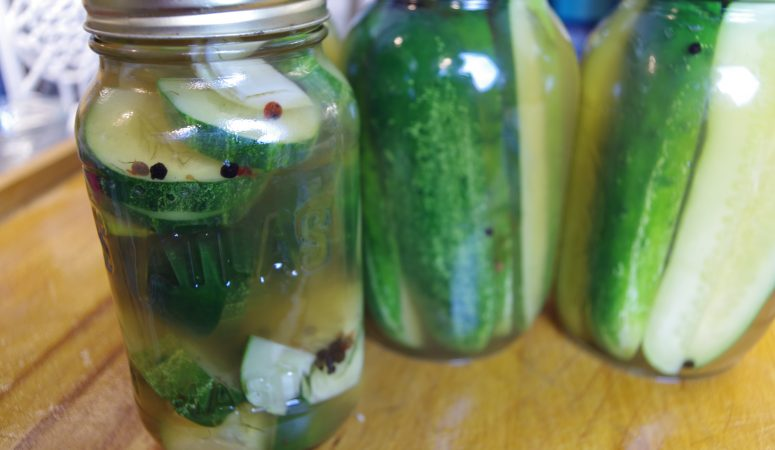 Clone of a Claussen- Refrigerator Dill Pickles